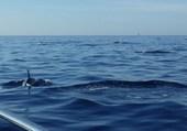 Puzzle Les dauphins à Ste-Maxime