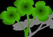 trèfles à 4 feuilles