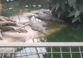 ferme aux crocodiles à Pierrelatte