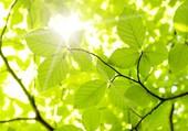 lumière feuilles