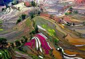 Puzzle champs de riz Vietnam