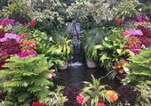 Fontaine et plantes