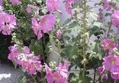 Fleurs de l'Ile