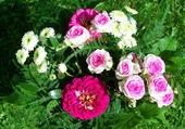 Vert, rose et blanc