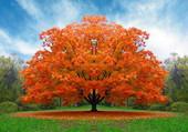 Puzzle arbre d'automne