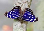 Papillon sur un tronc d'arbre