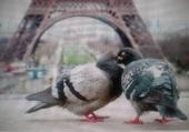 Puzzle Oiseaux amoureux  !!