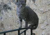 Lola, équilibriste de 9 mois