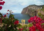 Fleurs sur l'ile de Madère