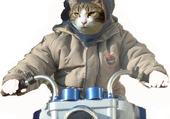 Le chat motard