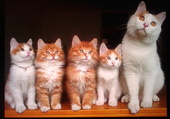 Famille nombreuse !
