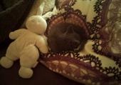 petit chaton qui dort en boule