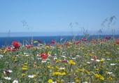 La méditerranée à travers des fleurs