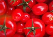 Belles tomates !
