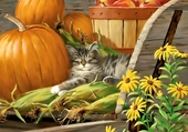 Kitten and pumpkins