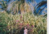 paysage de la Guadeloupe