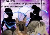 Puzzle entre chiens et loups