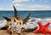 Coquillage et étoile de mer