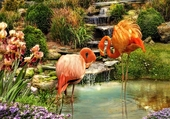 Jolis flamants rose