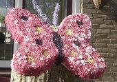 papillon en fleurs (Pays Bas)
