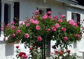 jardin fleurie
