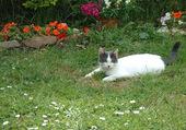 Pitchoune au jardin