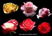 Puzzle les roses du jardin