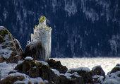 Féérie de l'arbre gelé