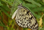 Puzzle papillon en gros plan