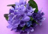 Un petit bouquet de violettes