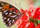 Magnifique ce papillon