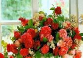 Profusion de fleurs