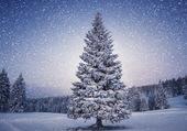 Paysage d'hivers