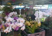 Marché aux fleurs À la Réunion