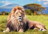 lion_enfants