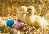 Puzzle Bientôt Pâques ;-)