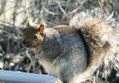 L'ami écureuil