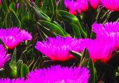 Puzzle Fleurs de couleur vive
