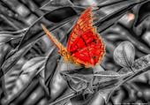 Puzzle Nature et Papillon