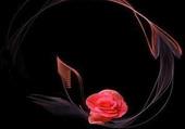 Jolie rose en décoration