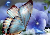 Superbe Papillon et sa fleur