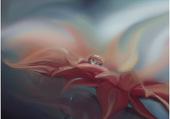 Fleur et sa goutte d'eau...