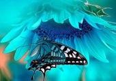 Une pure beauté,tournesol et papillon
