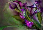 La douceur des Papillons