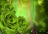 Roses vertes étoilées