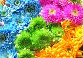 Joli bouquet de fleur