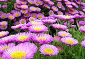 Un champ de fleur