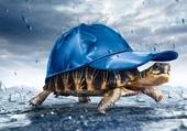 Astucieuse tortue
