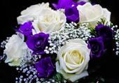 Blanc et violet