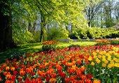 Le coin des tulipes...